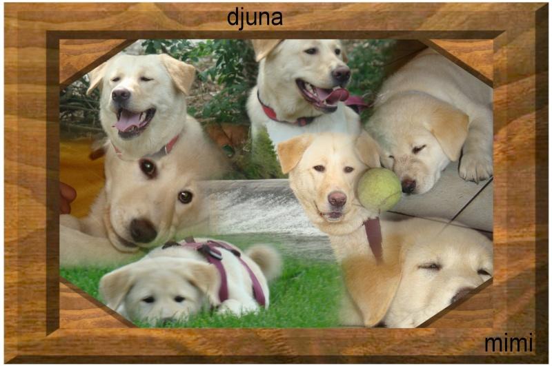 Le labrador (avec video et photos de Djuna) Montag13