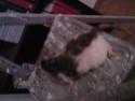 Petite ratoune esseulée... presque 1 an, {26, 69, 07 etc.) Sp_a0212