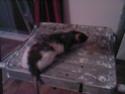 Petite ratoune esseulée... presque 1 an, {26, 69, 07 etc.) Sp_a0213
