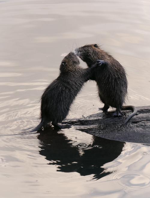 Bataille au bord de l'eau Ragnod11