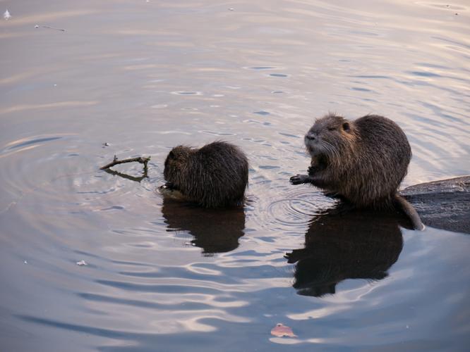 Bataille au bord de l'eau Ragnod12