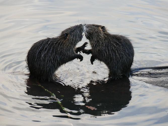Bataille au bord de l'eau Ragond11