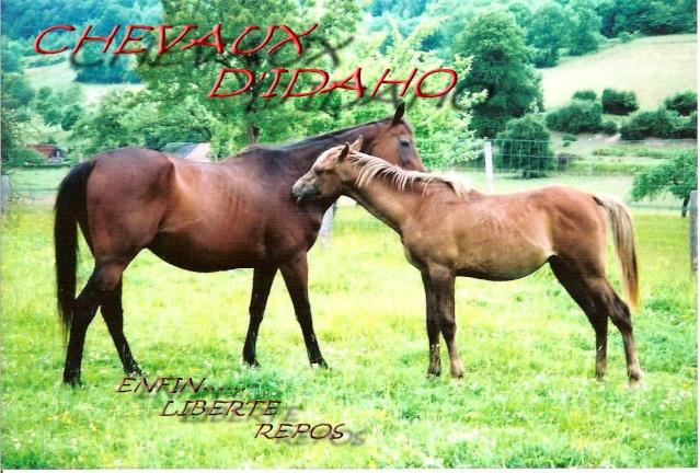 les chevaux d'Idaho