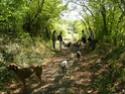 Le Forum du Rhodesian Ridgeback - Portail Rencon10