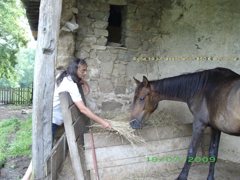 Sofie N° Sire : 52496651 X , femelle bai , pucée , identifiée, née en 2006.lieu 42 prix :500e Fifi1912