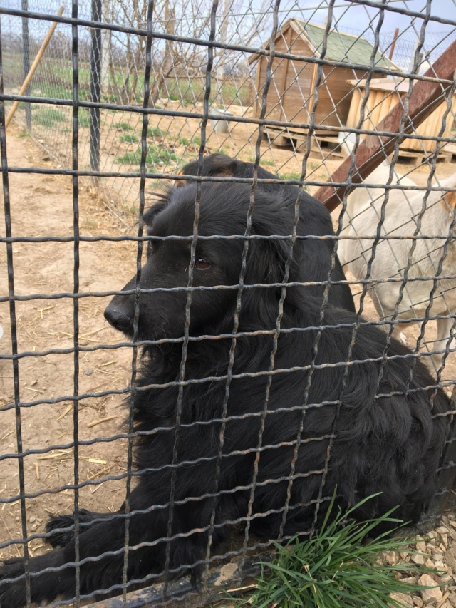 DJINA X-F, taille moyenne, env. 18 kg, née 2012 Ancien de Backa (BELLA) Prête à voyager - Page 2 52850010
