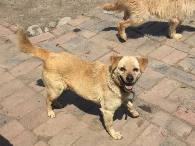 WIKA, X-F, taille moyenne, env.  12-13 kg, née 2006 - Ancien de Backa (BELLA) 64783410