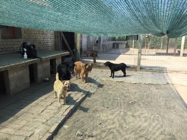 WIKA, X-F, taille moyenne, env.  12-13 kg, née 2006 - Ancien de Backa (BELLA) 66160010
