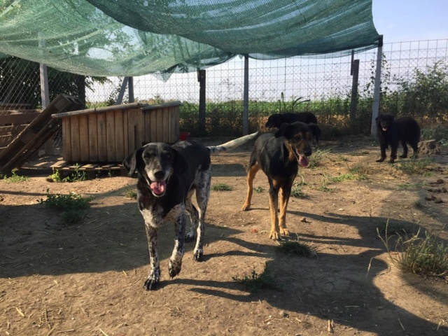 DJINA X-F, taille moyenne, env. 18 kg, née 2012 Ancien de Backa (BELLA) Prête à voyager - Page 2 66785913