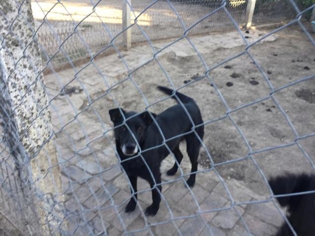 JUSTIN M-X labrador noir, taille moyenne, env. 25 kg, né 2013 Ex-Backa(BELLA)PRET/ BESOIN DE SOINS - Page 4 70767310
