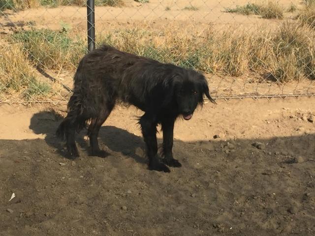 DJINA X-F, taille moyenne, env. 18 kg, née 2012 Ancien de Backa (BELLA) Prête à voyager - Page 2 Djina_10