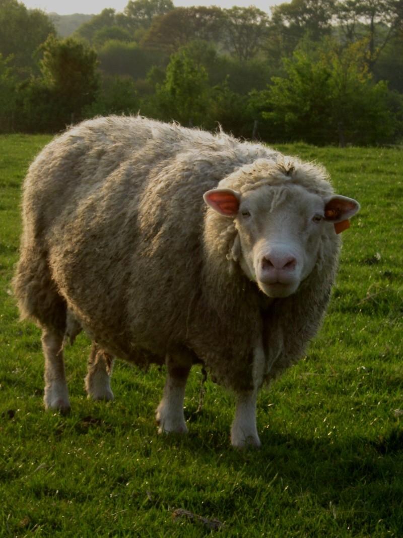 Aller un petit voyage chez les laineux.... Img_2310