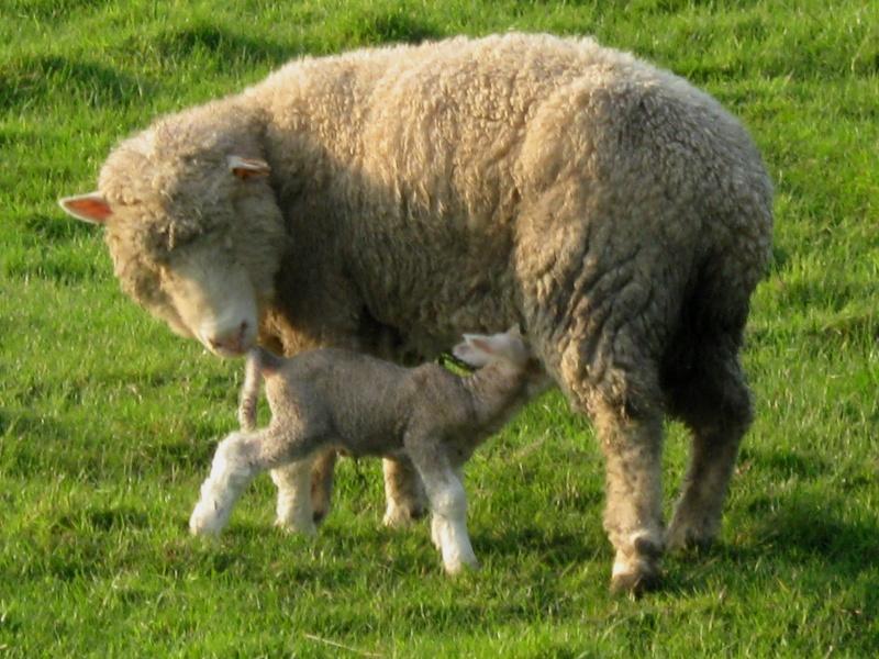 Aller un petit voyage chez les laineux.... Img_2311