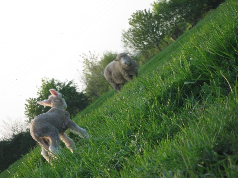 Aller un petit voyage chez les laineux.... Img_2312
