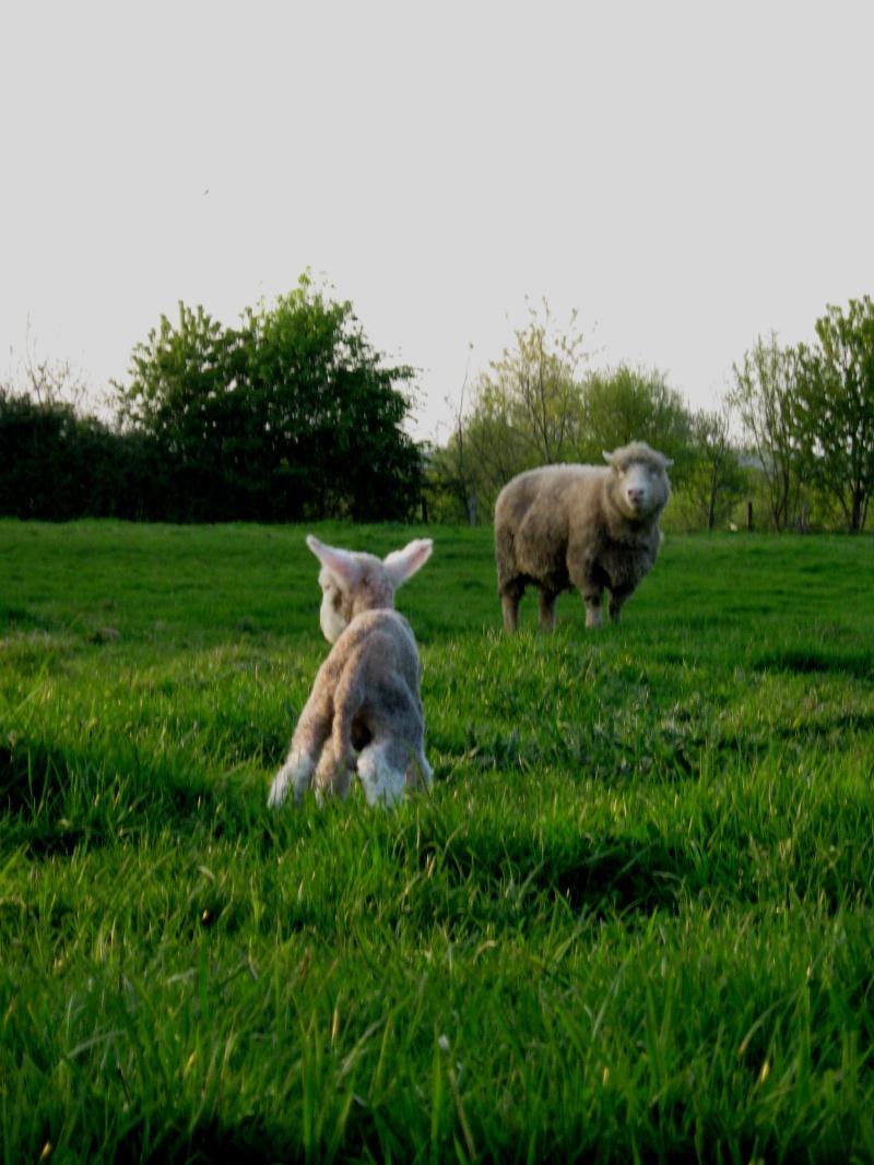 Aller un petit voyage chez les laineux.... Img_2313