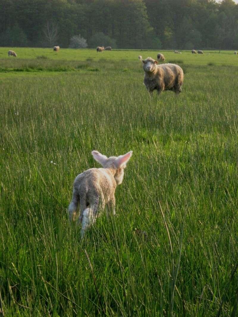 Aller un petit voyage chez les laineux.... Img_2314
