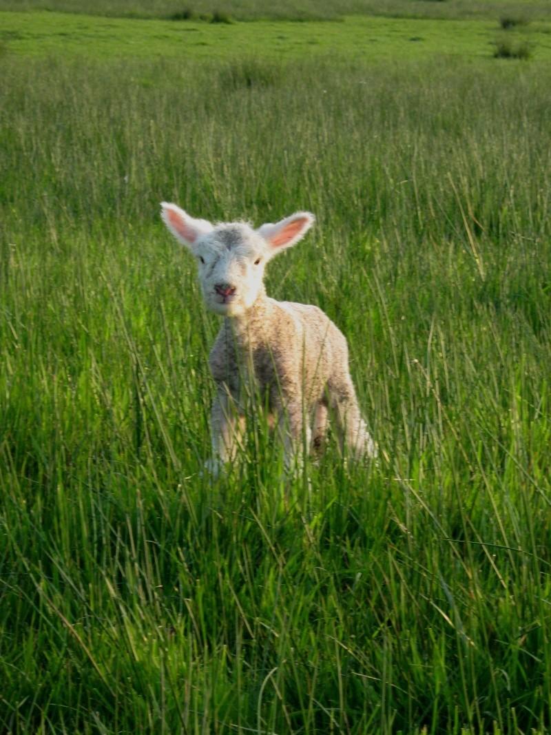 Aller un petit voyage chez les laineux.... Img_2315