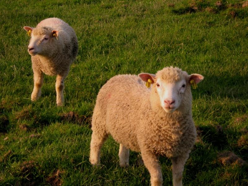 Aller un petit voyage chez les laineux.... Img_2319