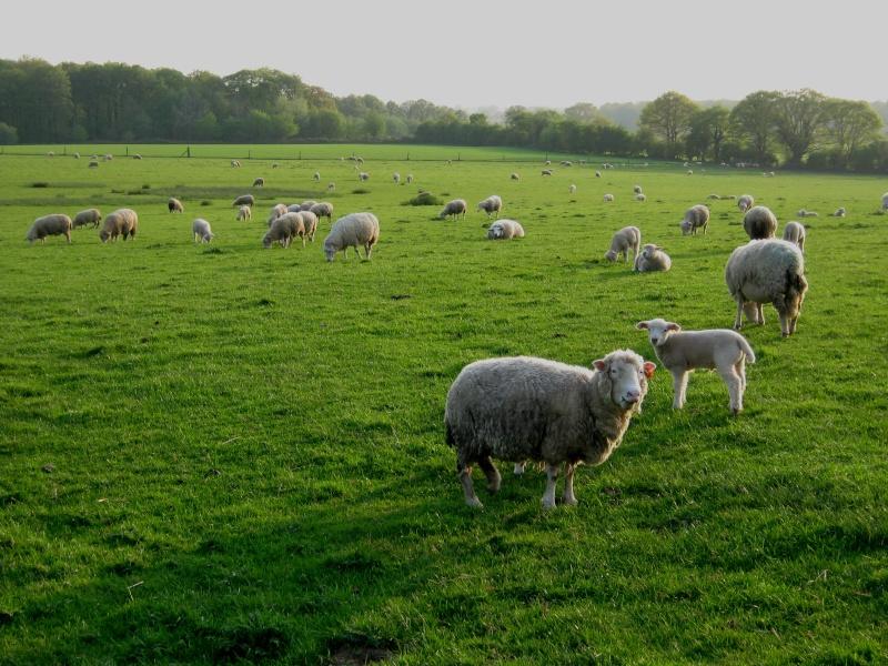 Aller un petit voyage chez les laineux.... Img_2321