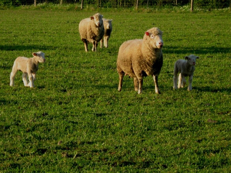 Aller un petit voyage chez les laineux.... Img_2322