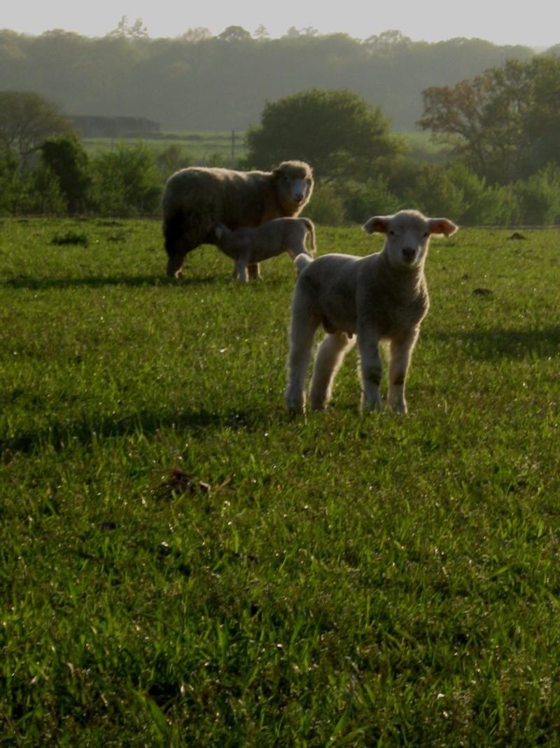 Aller un petit voyage chez les laineux.... Img_2323