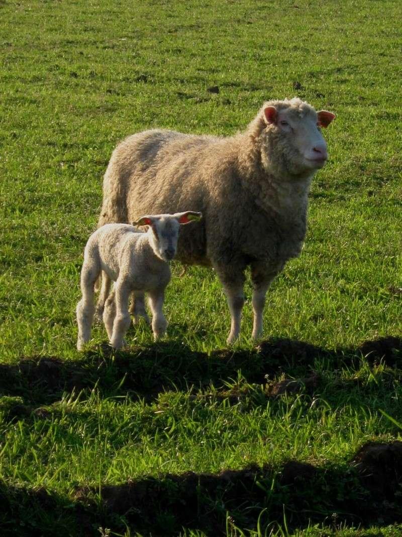 Aller un petit voyage chez les laineux.... Img_2324