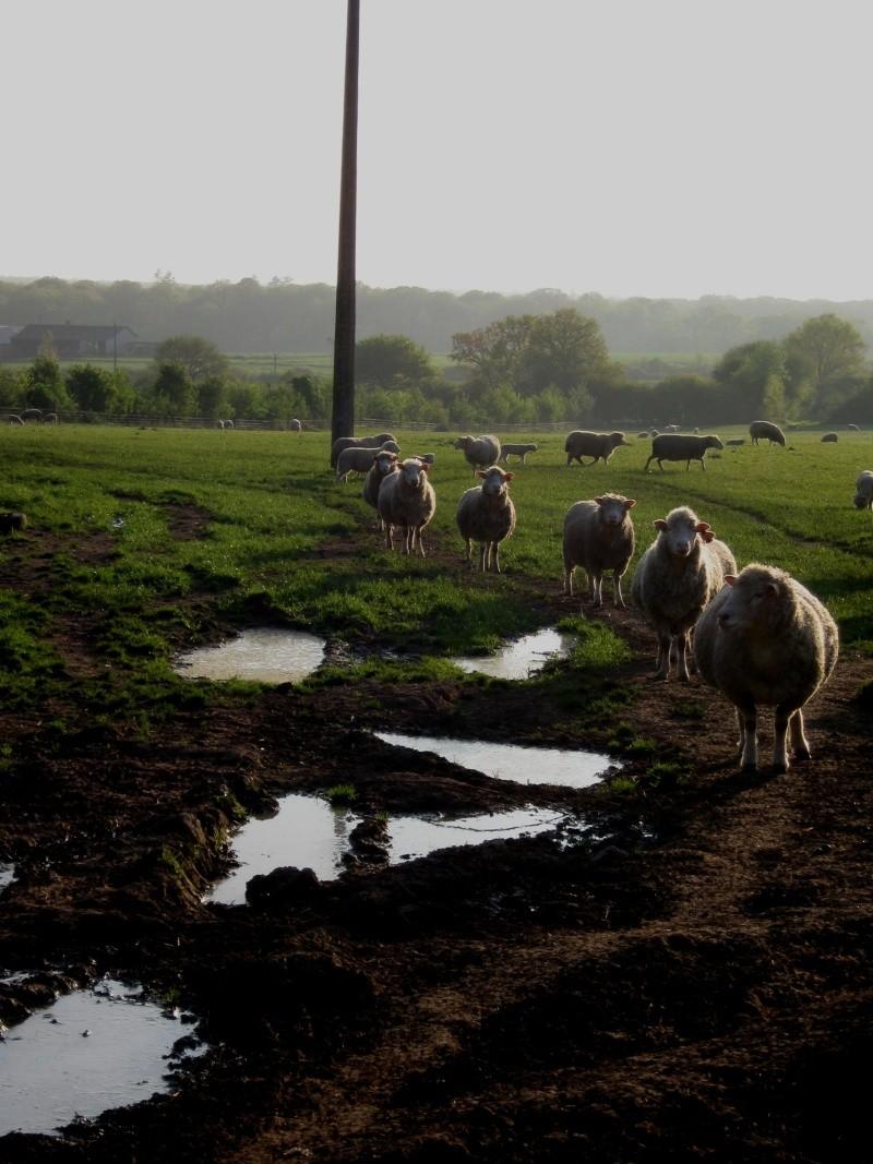 Aller un petit voyage chez les laineux.... Img_2325