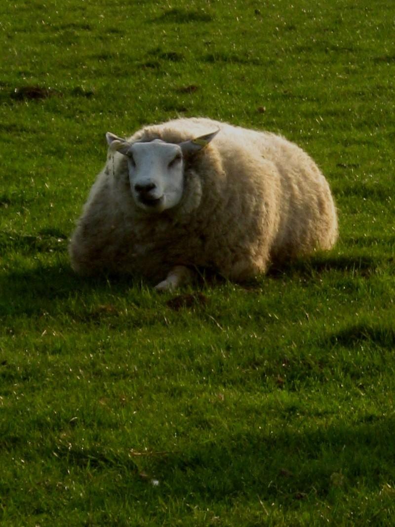 Aller un petit voyage chez les laineux.... Img_2327