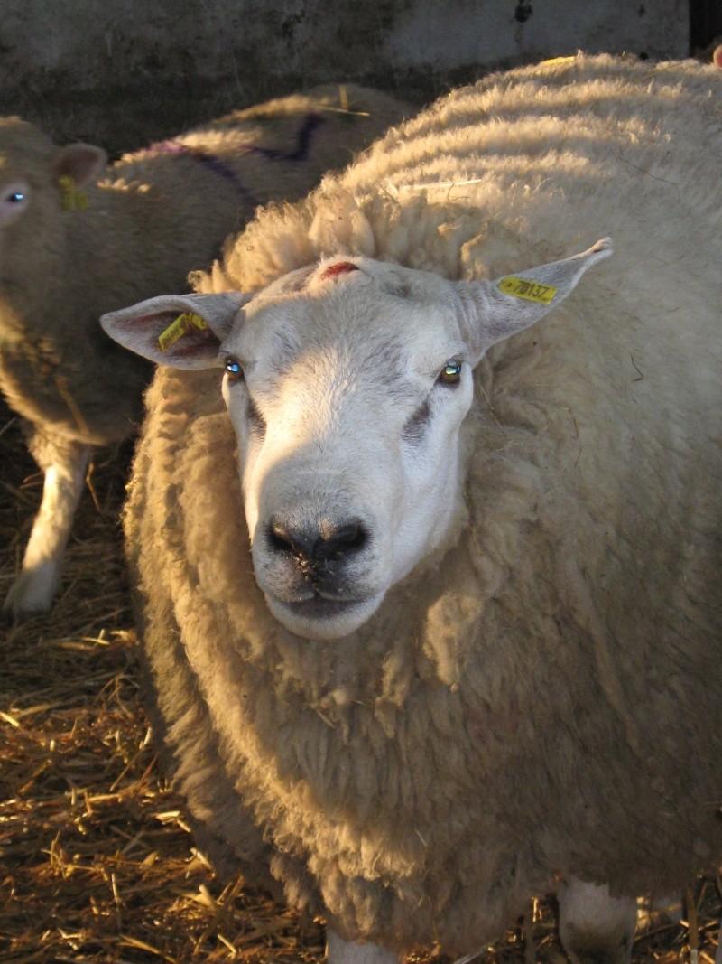 Aller un petit voyage chez les laineux.... Img_2328