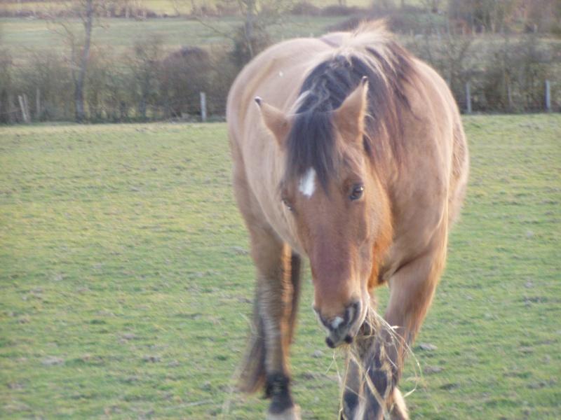 IDAO  - ONC Poney typé Henson né en 1996 - adopté en mai 2009 par Florence Idao2010