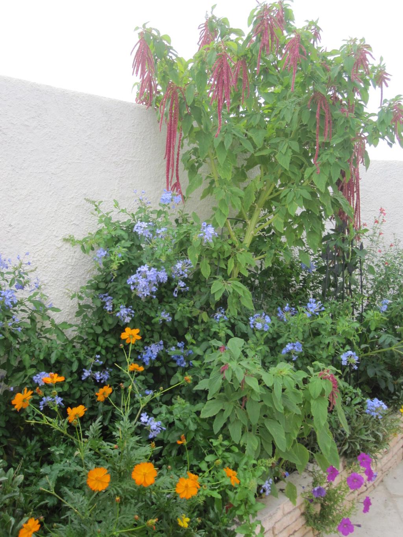 Des jardins ..... - Page 2 Img_5432