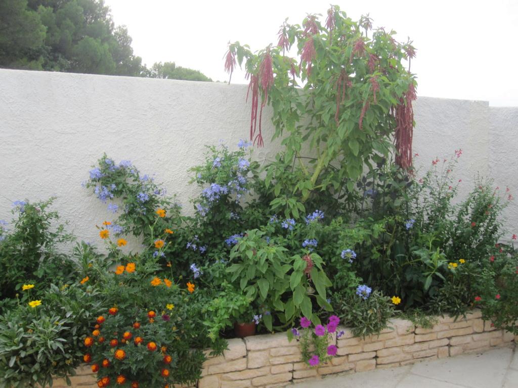 Des jardins ..... - Page 2 Img_5512