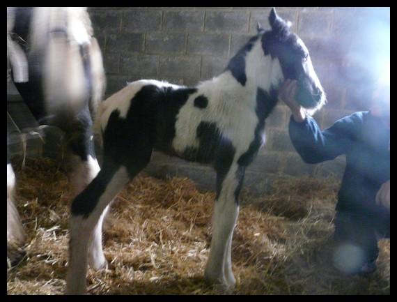 11 IC... Premier bébé 2009 à La Corne du Bois photos pages1,2,3 Copie_19