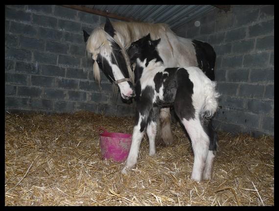 11 IC... Premier bébé 2009 à La Corne du Bois photos pages1,2,3 Copie_21