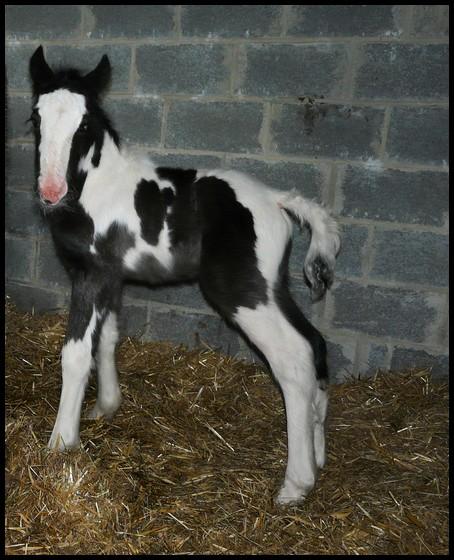11 IC... Premier bébé 2009 à La Corne du Bois photos pages1,2,3 Copie_25