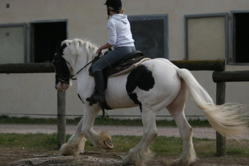 Cool Man... Tenue de DRESSAGE en bas de la P2 !! Cool_m38