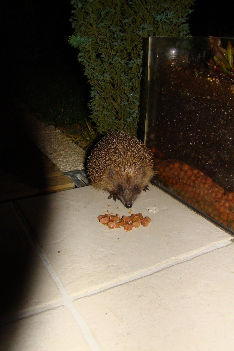 Vote concours animaux octobre 2009 Dsc02310
