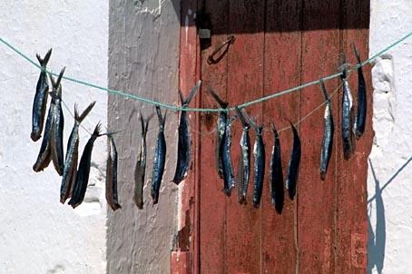 La Pesca Secade12