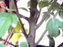 Ou trouver des bonsais indigénes en belgique? 123_0010