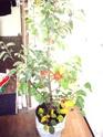 Ou trouver des bonsais indigénes en belgique? 91_00212