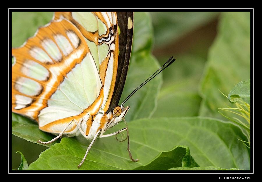Sortie photo aux jardins des Papillons à Grevenmacher (L) 04 AVRIL 2009 - Les photos - Page 2 Greven11