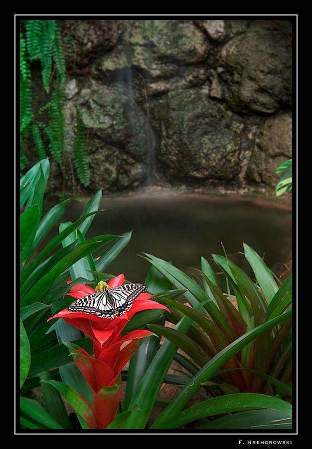 Sortie photo aux jardins des Papillons à Grevenmacher (L) 04 AVRIL 2009 - Les photos - Page 2 Greven14
