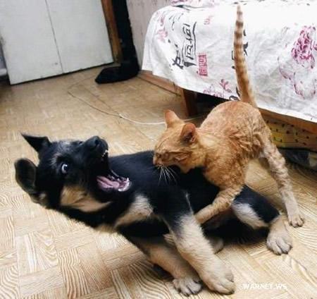 Juego: traeme una imagen Gato-m10