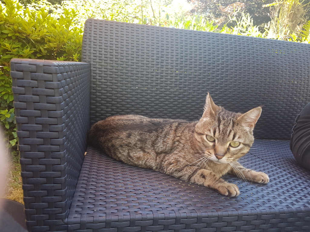 Idina, femelle tigrée, née le 01/01/13, chatte libre à Scaer 20180712