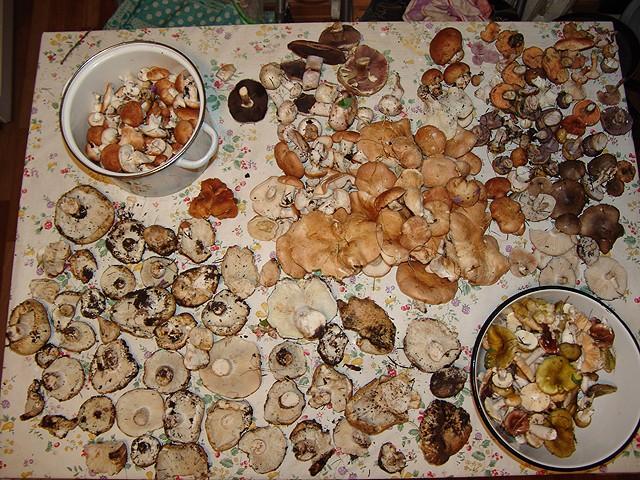 Охота за грибами! Gribi11