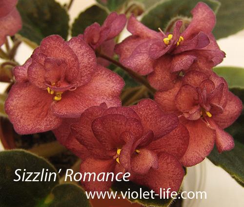 Sizzlin Romance  (Сизлин Романс) P.Sorano 2008. Sizzli10