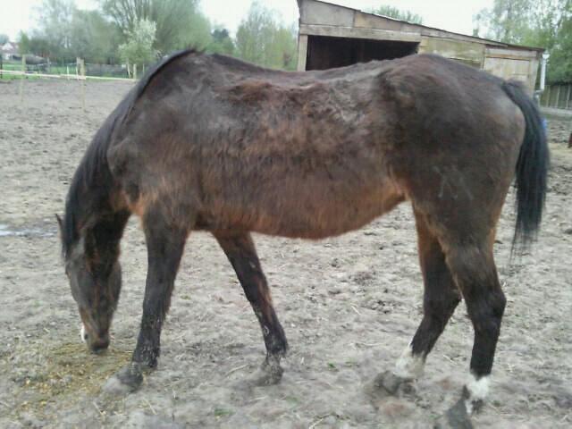 La silhouette du vieux cheval - Page 2 Photo010