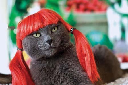 Glamour Puss Kittyr10