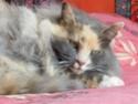 Poupoune et Charbon mes chats Dscf0011