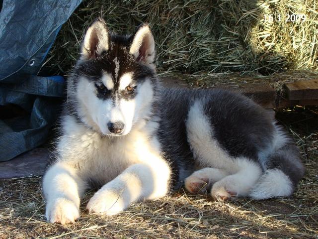 Nos loups grandissent, postez nous vos photos - Page 2 Dsc01012
